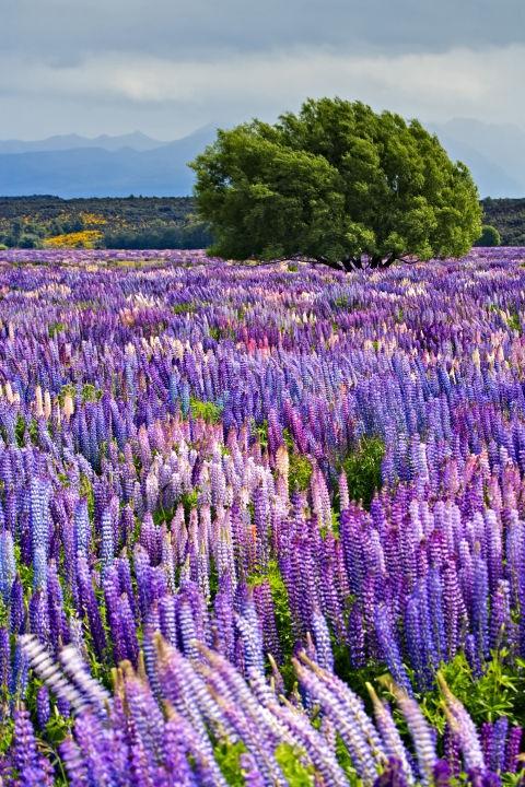 Националниот парк Фјордленд во Нов Зеланд