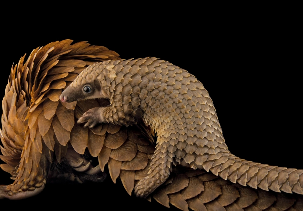 Photograph by JOEL SARTORE