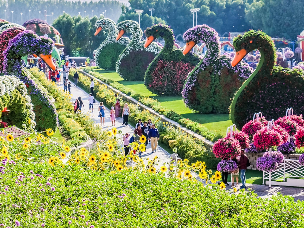Miracle Garden, Дубаи
