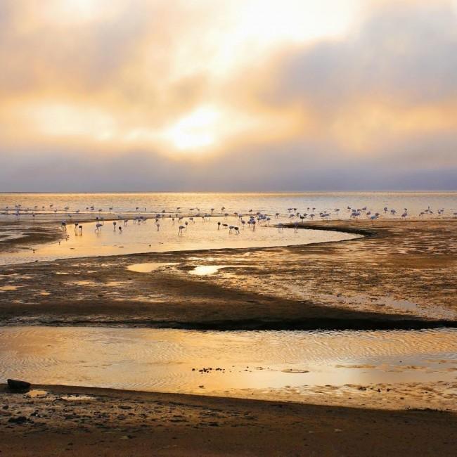 Велвис заливот во Намибија