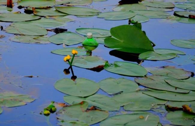 Зборување со жолтиот локвањ на Славица Панова